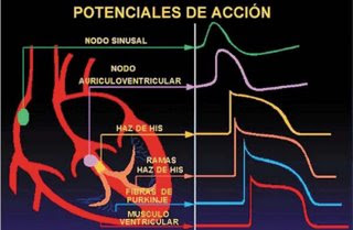 Descargar Gratis Manual Nte Ecg