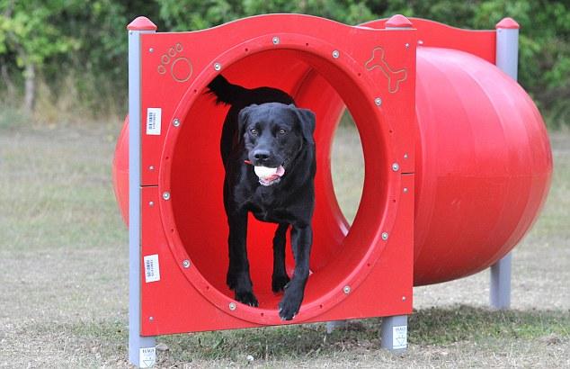 Dog Training Dispensery For Dog Training