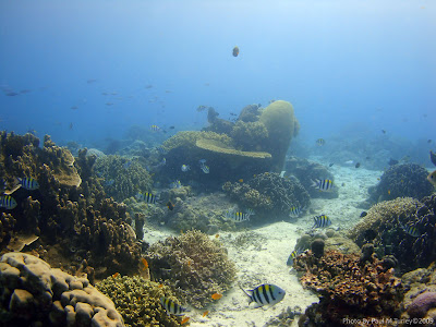 Reefscape, Close Encounters, Pemuteran, NW Bali, Sea Rovers Dive Centre