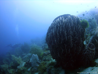 Barrel Sponge, Reefscape, Close Encounters, Pemuteran, NW Bali, Sea Rovers Dive Centre