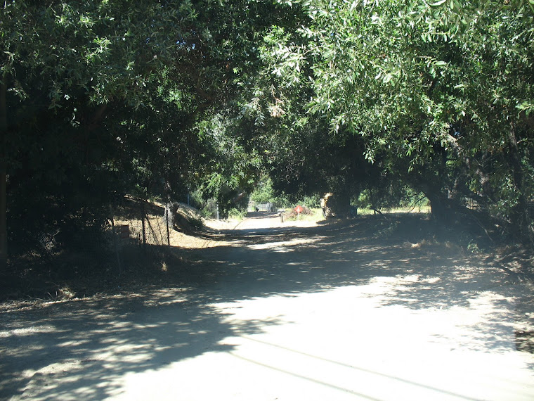 Old Carbon Canyon Road (now Ginseng Lane)