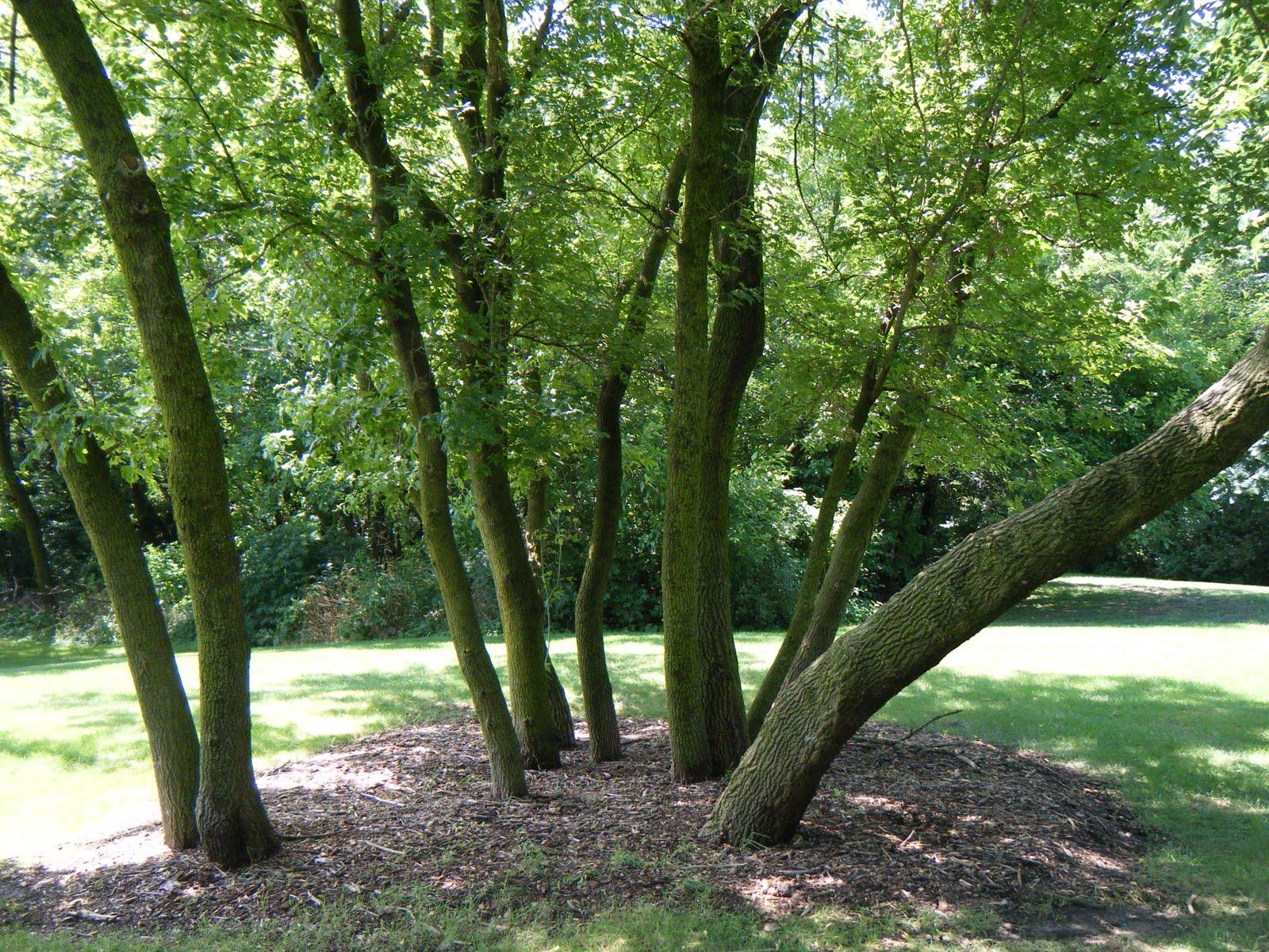 a grove of trees awaiting a hammock coolkayaker1  9 1 10  rh   coolkayaker1 blogspot