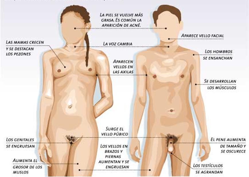 La sexualidad en las diferentes etapas de la vida y en