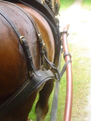 Un cheval, une roulotte...