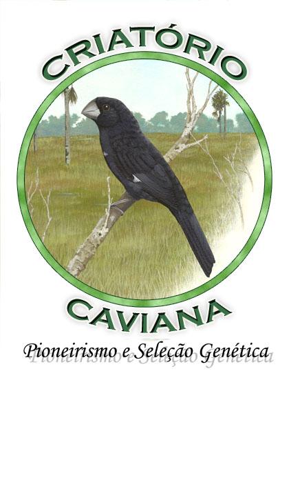 CRIATÓRIO CAVIANA (PIONEIRISMO E SELEÇÃO GENÉTICA)