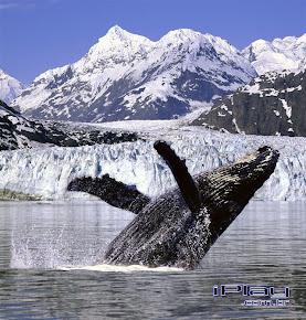 Baleia do Mês