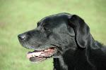 Balou 26-02-1997 #28-12-2011