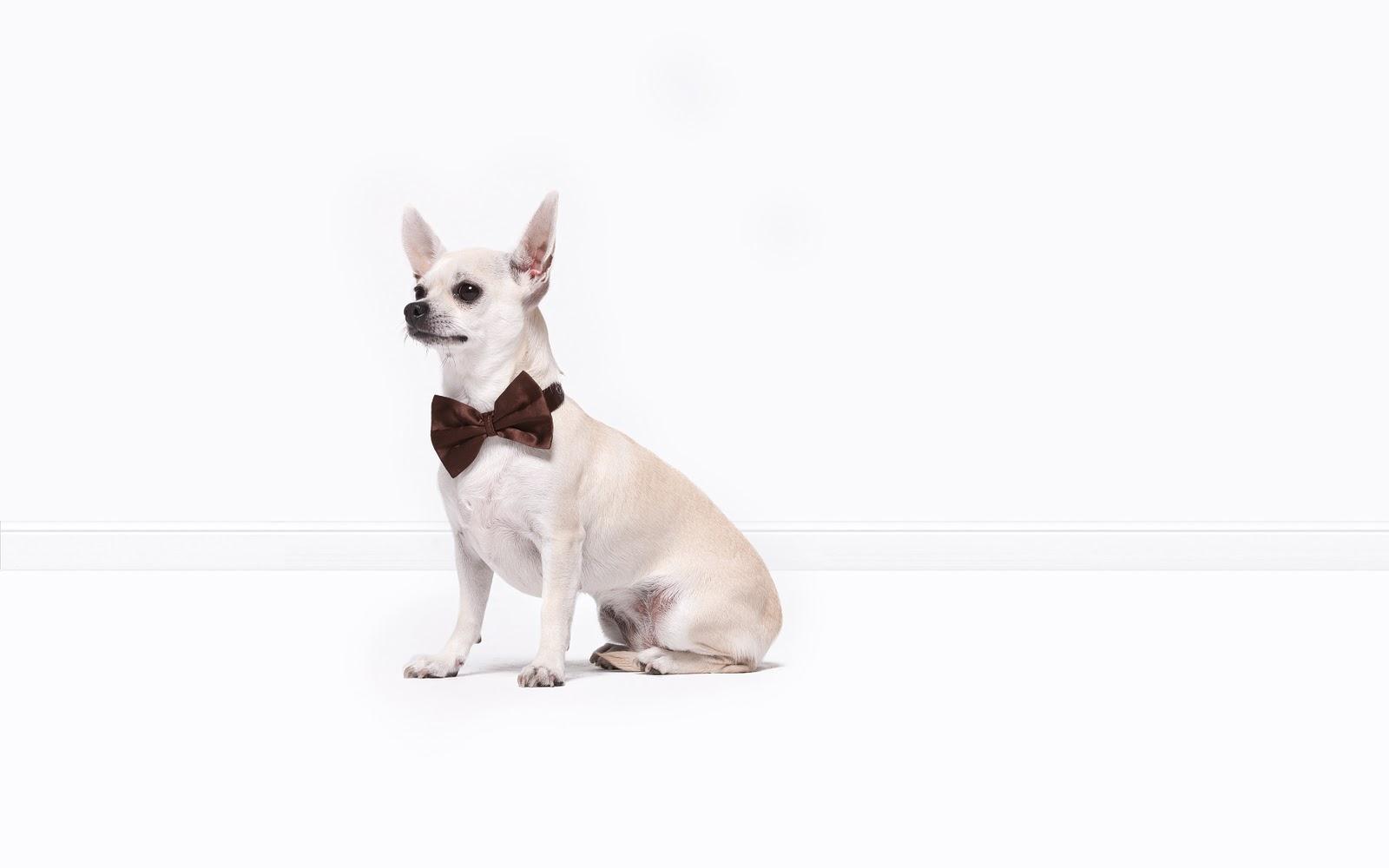 el perro moderno las elegantes mascotas de adolfo dom nguez