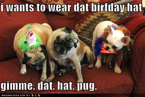 funny birthday comments. happy irthday funny dog