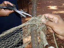 Freeing the tree snake form the fishing net