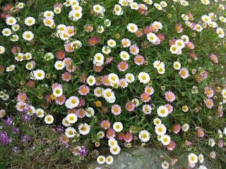 El jard n de margarita plantas arbustos flores for Arbustos con flores para jardin