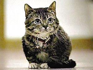 مــوسوعة العجائب الغرائب الاكبر على cat4.jpg