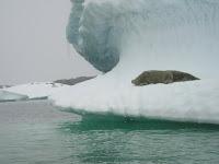 Middagdutje op het ijs
