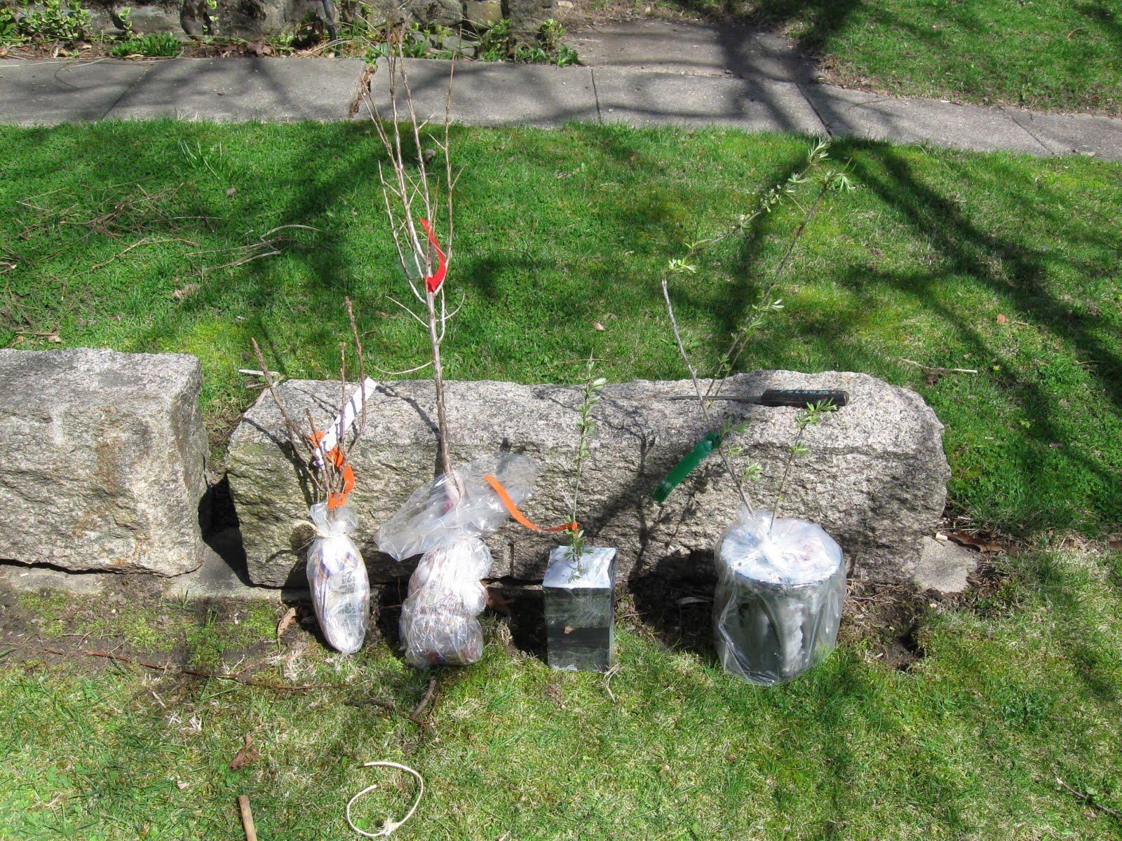 Сохранить саженцы до весны в домашних условиях