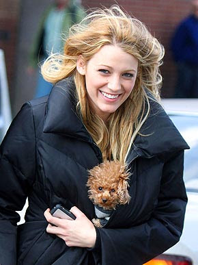 Blake Lively Maltipoo on Blake Lively  I Want Your Dog
