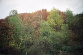 pădurea la Dâncu-Mic