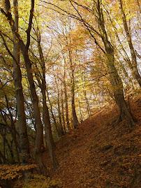 Pădurea toamna