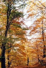 Pădurea din Pianu