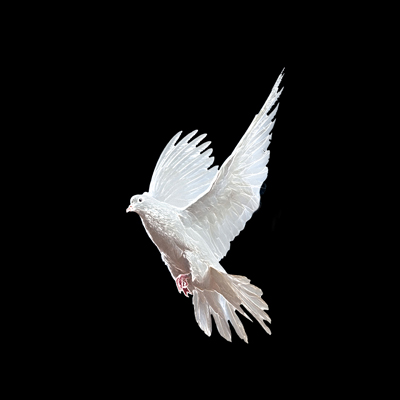 Белый голубь не сложно