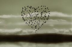 Amour Sagesse