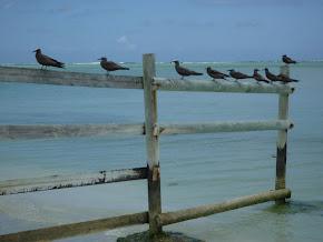 L'Île aux Cocos à Rodrigues