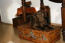 De liefste en leukste......pup !!
