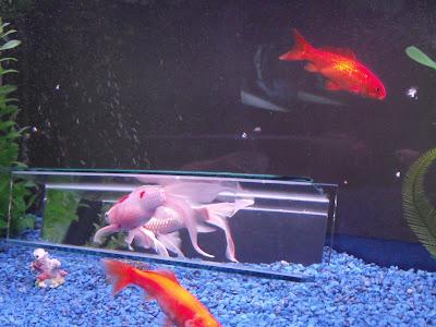 Glass mirror fish tank box spiroglass inc for Loves fish box menu