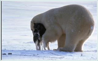 фотографии полятного медведя