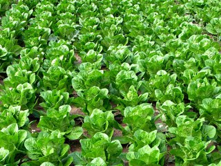 La ingenieria agronomica la horticultura for Horticultura definicion