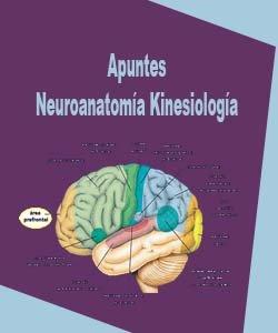 Apuntes neuroanatomia-kinesiologia
