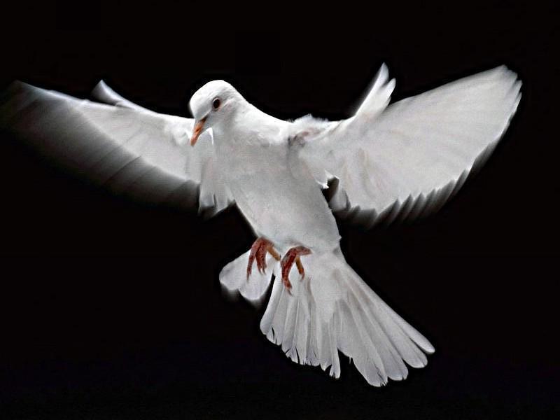 paz e amor simbolo. pictures simbolo da paz e