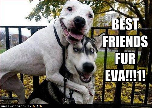 funny-dog-pictures-best-friends-forever.jpg