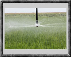 sprinkler package on rice 2010