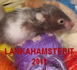 Lankahamsterit-bloginappi