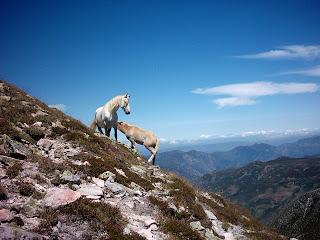 Pico Cornón, León-Asturias (2005)
