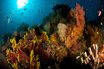 Diving in Raja Ampat Sea