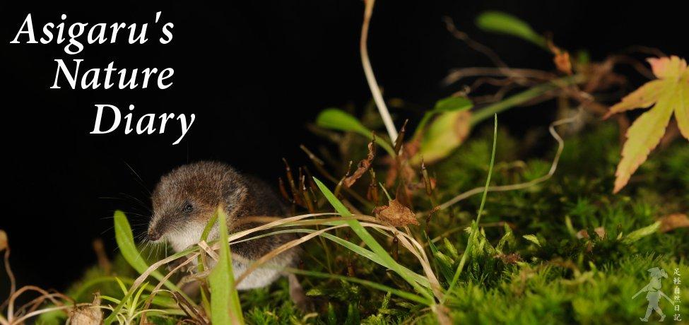 Asigaru's Nature Diary