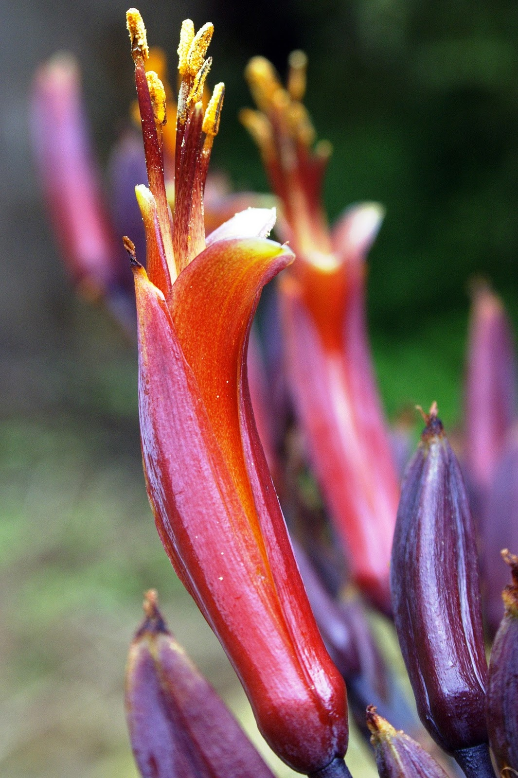 Tepal Petals And Sepals Of A Flower Look Almost Identical Botany