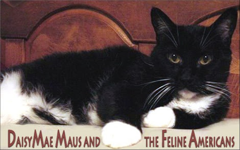 DaisyMaeMaus &amp; the Feline Americans