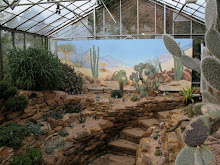 Mural in Cactus House, University of Durham Botanic Garden