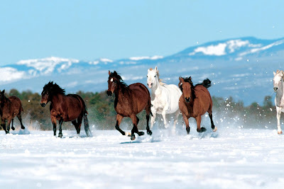 caii slbatici in natura iarna