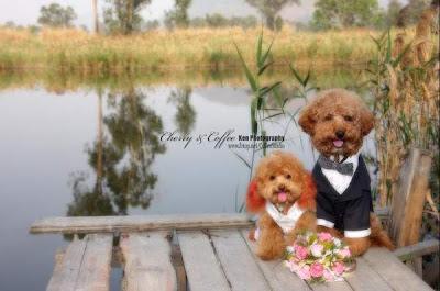 nunta animale ciudatenii