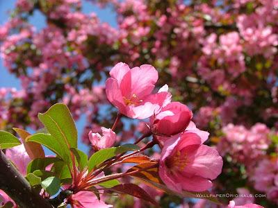 natura peisaj primavara flori