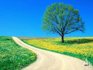 iarba verde frunze