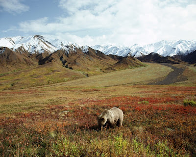 urs peisaj de iarna canada