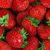 STRAWBERRY FIELDS FOR EVER