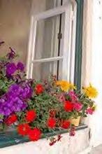 Uma janela especial !!!!!!!!!!