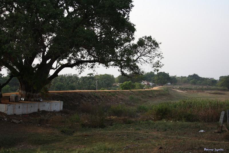 Mud Road