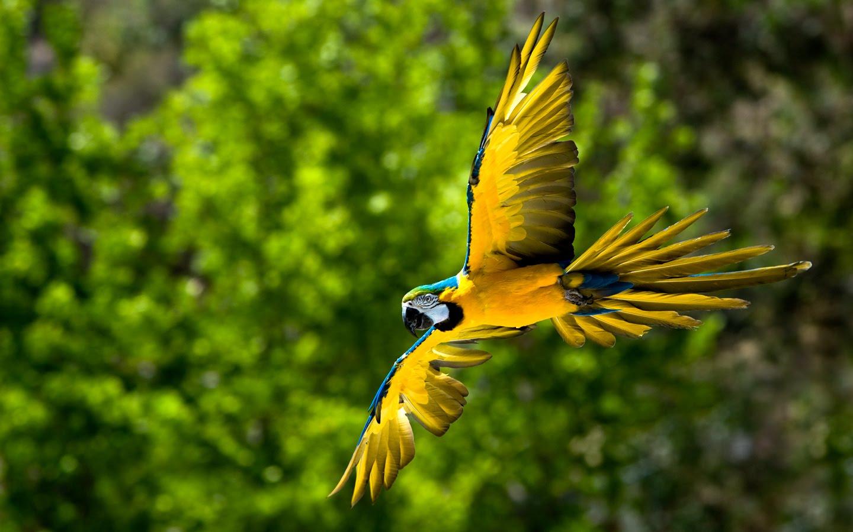 free desktop wallpapers backgrounds 10 beautiful birds