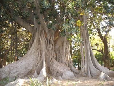what are banyan tree s main success factors